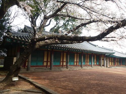 Co-Jejudo-Jeju-bus-centre-ville-Samseongyeol (12)