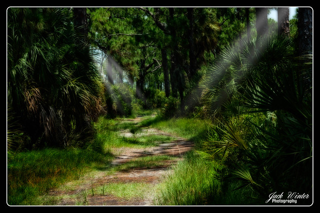 Honeymoon Island Nature Trail
