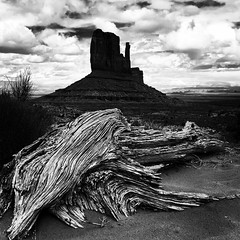 The Juniper Lady #monumentvalley #juniper #navajonation #arizona #desert #westmitten #iphone6plus