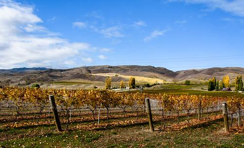 autumn trees newzealand sky clouds landscape vineyard autumncolours southisland bannockburn wineregion tripanzacblipmeetcentralotago