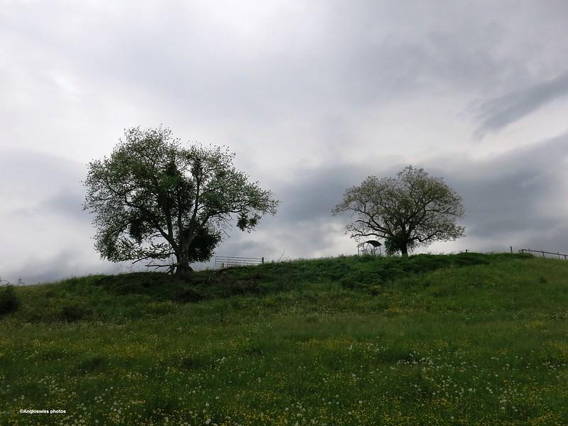 Trees, Feldbrunnen on a hill above the River Aar