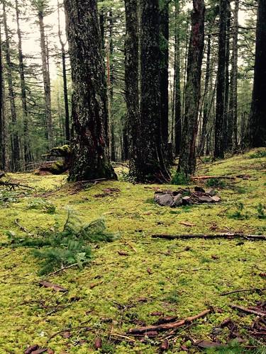 オーカス島では苔生す森を駆けまわります。