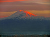 Versicolor Ararat