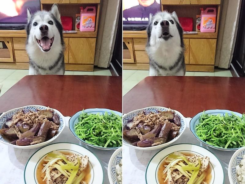 Doggy貪吃狗7桌2