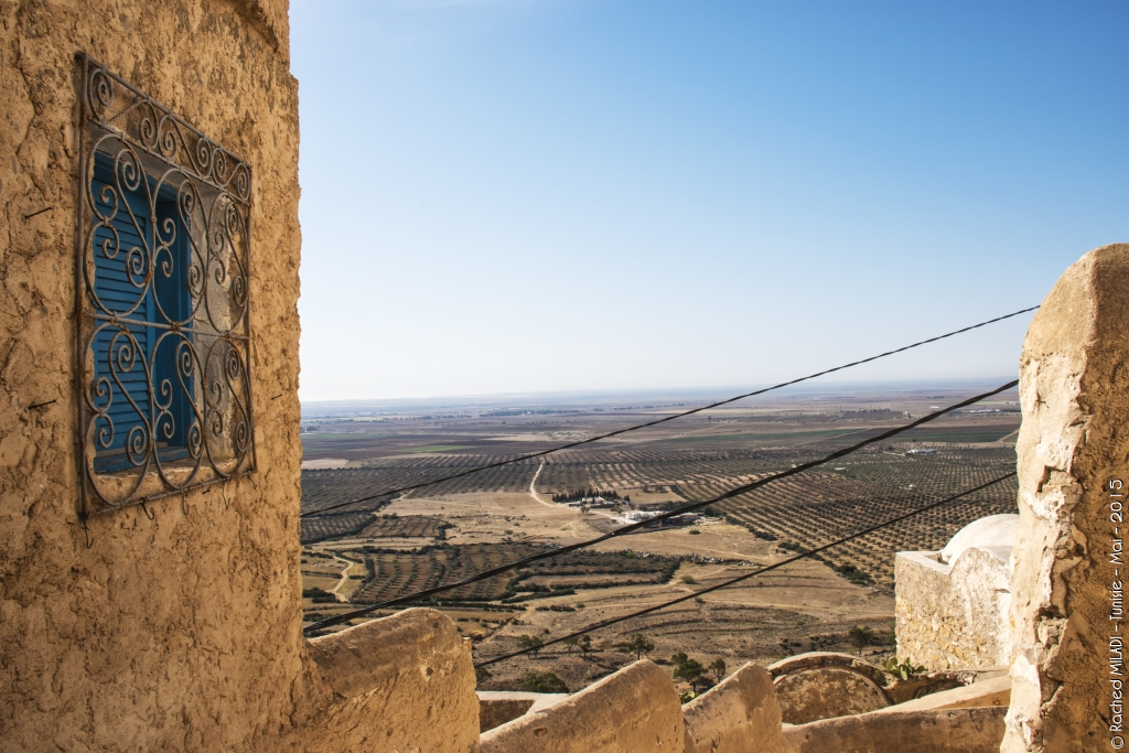 Vue sur les plaines d oliveraies