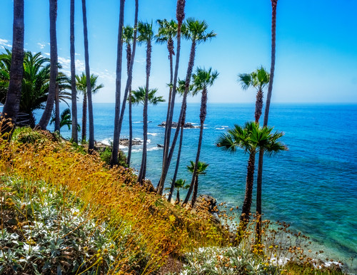 ocean california park trees us unitedstates pacific hill palm lagunabeach heisler