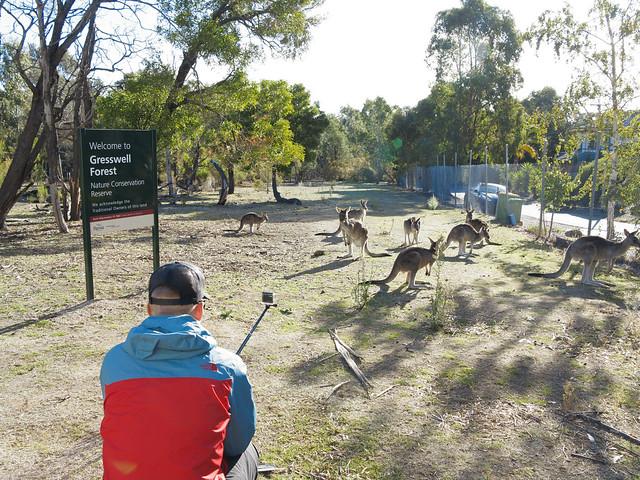 Jonas og kenguruene