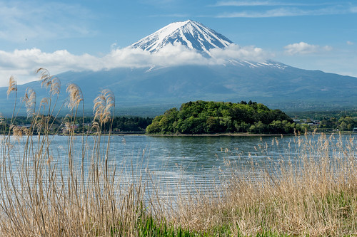 japan spring fuji may 日本 candidate crazyshin 河口湖 2015 lakekawaguchi 富士五湖 富士 山梨県 南都留郡 afsnikkor2470mmf28ged nikond4s 20150503ds18699