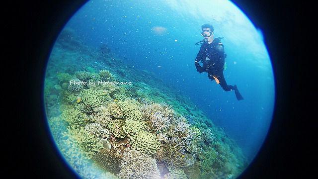 サンゴの上をまったり泳ぐにーに