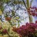In Bloom by derek0adams