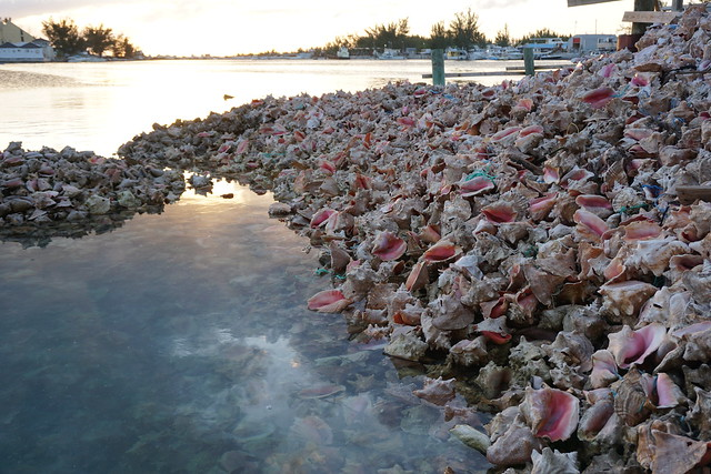 Piles of conch shells behind Goldie's Restaurant at the Fish Fry-Nassau, Bahamas