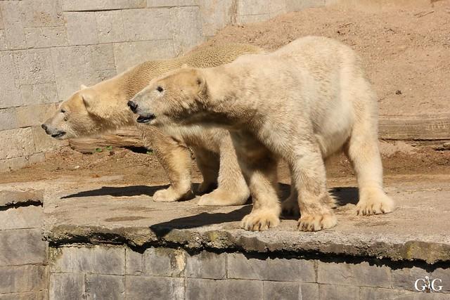 Besuch Zoo Rostock 07.05.2016149