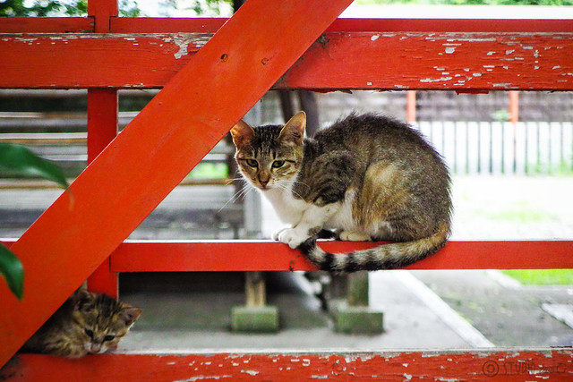 Today's Cat@2016-07-15