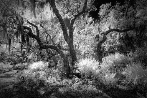 ir landscapes florida infrared 720nmir infraredconverted7d