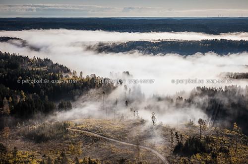 3 sverige dimma swe västragötaland kalhygge hällevadsholm