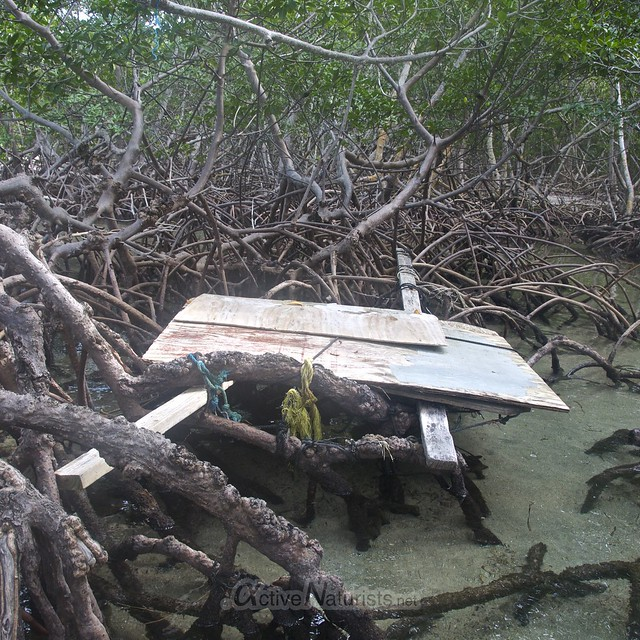 mangroves view 0002 Key Biscayne, Miami, Florida, USA