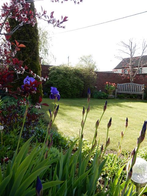 May garden 2015 (7)