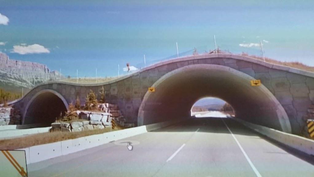 Community creativity manifest through this bridge, maybe. #ridingthroughwalls