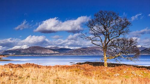 mountains tree scotland unitedkingdom bennevis vista glencoe lochaber lochlinnhe