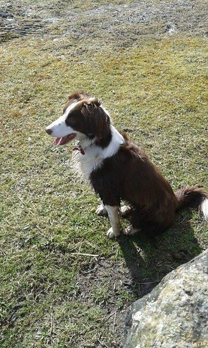 Sun, May 17th, 2015 Lost Female Dog - N52, Offaly