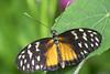 Butterfly 2016-34