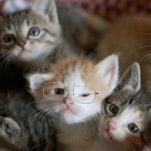 Darling_glasses_2