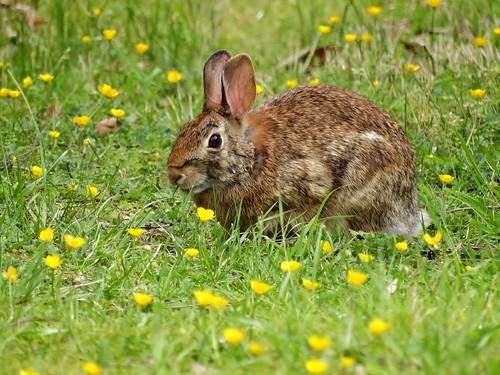 statepark rabbit spring