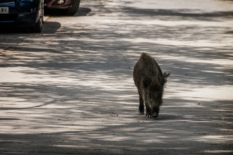 Nueva fauna urbana
