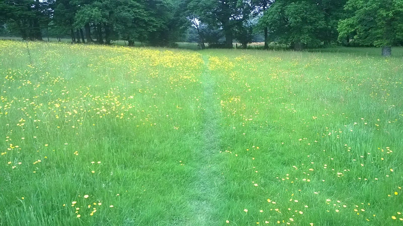 Tiptoe through the daisies alternative north-eastern route between points 6 & 7.