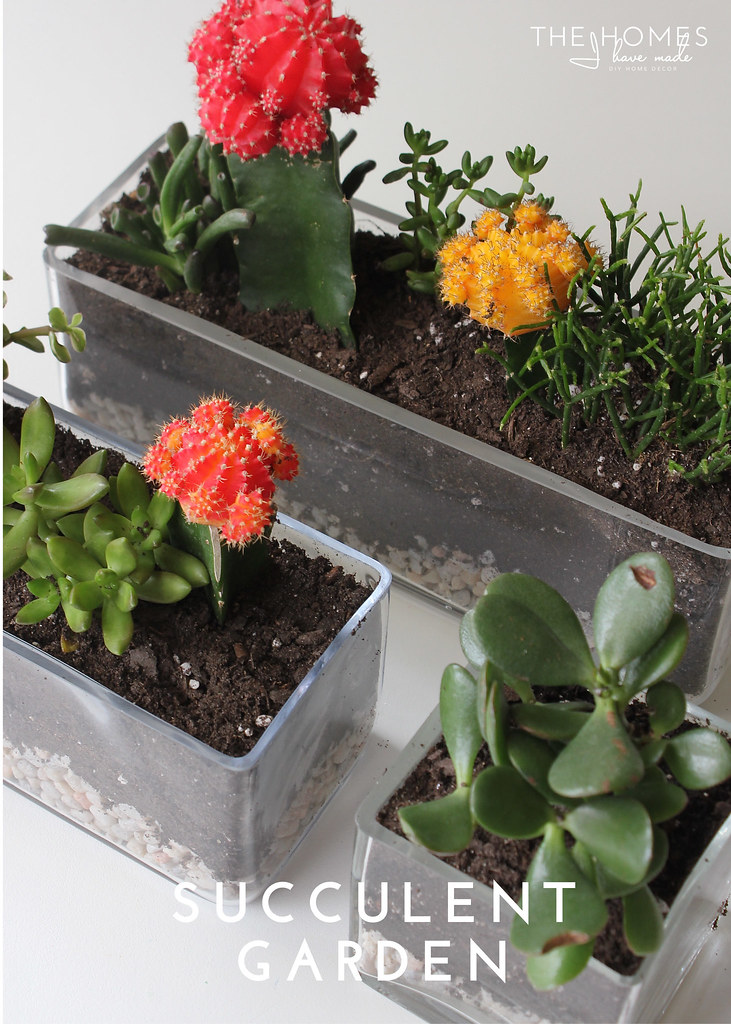 Hits and Misses Home Decor Succulent Garden