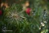 Back Garden Photography
