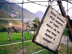 Feeding the donkey in Saint-Maurice