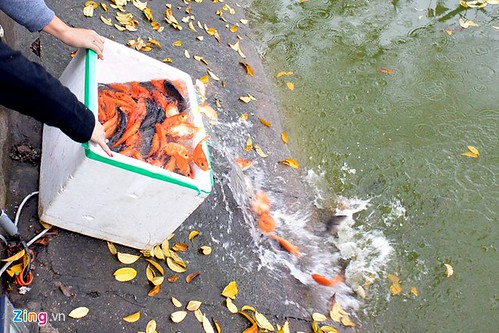 Không nên mua cá nuôi để phóng sinh?