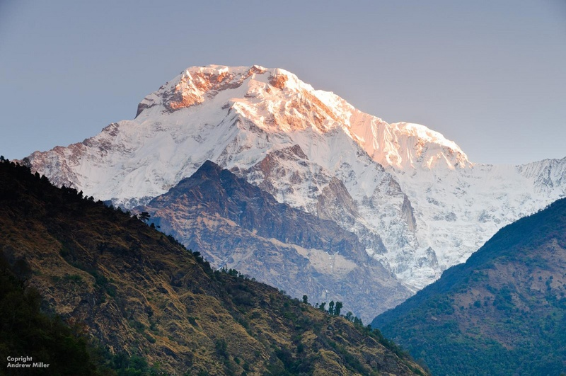 Great Himalayan
