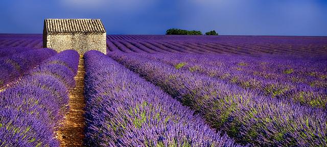 Senteurs de Provence.......