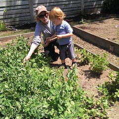 exploring the wonders of ms. judy\'s garden. another generation captivated by her energy. :heart_eyes:#alwaysateacher #neighbors #latergram