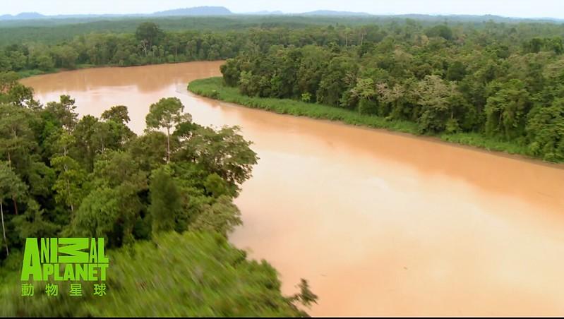 沿著京那峇河進入蒼翠濃密的熱帶雨林。(動物星球頻道提供)
