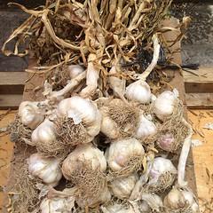coconut(0.0), onion(0.0), shallot(0.0), plant(0.0), matsutake(0.0), root(1.0), vegetable(1.0), garlic(1.0), produce(1.0), food(1.0),