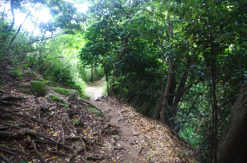 toomilog-tengoku_Hiking_trail003