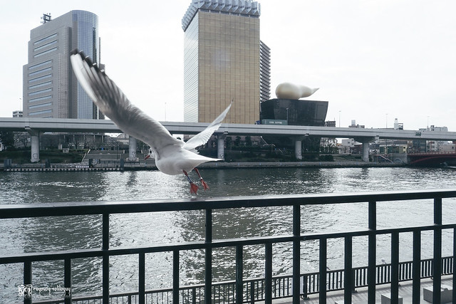 PEN F x Tokyo | 06