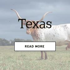 texastext
