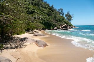 Anse Marie-Louise の画像. sc seychelles praslin ansemarielouise