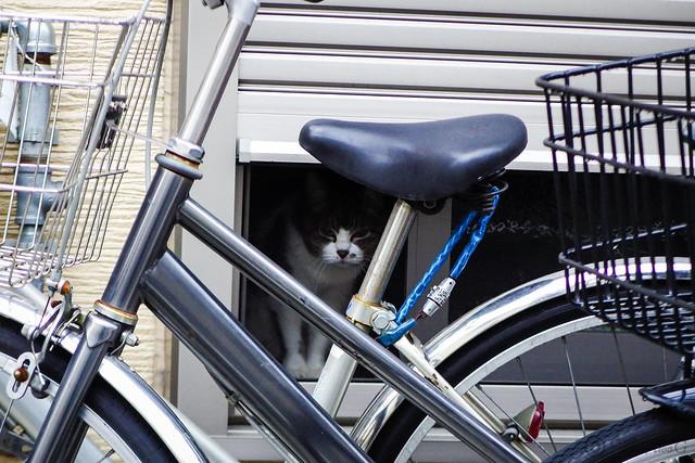 Today's Cat@2016-05-27