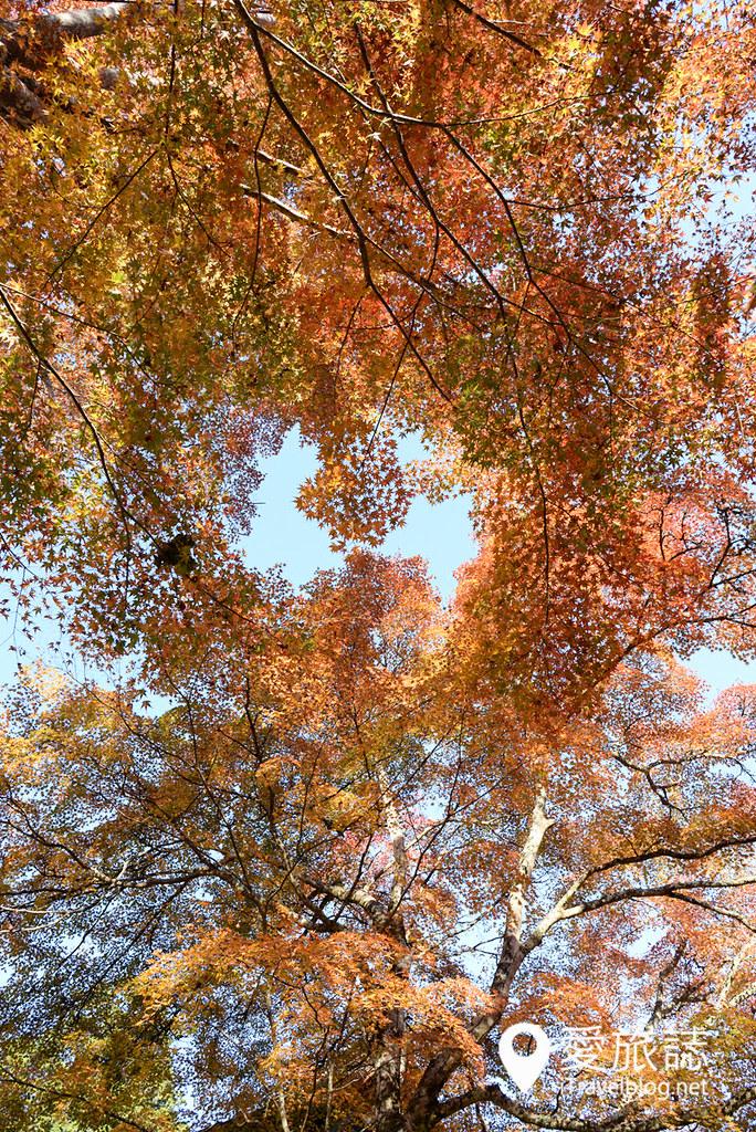 京都赏枫景点 高雄西明寺 22