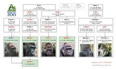 Gorilla Family - Kansas City (2015)