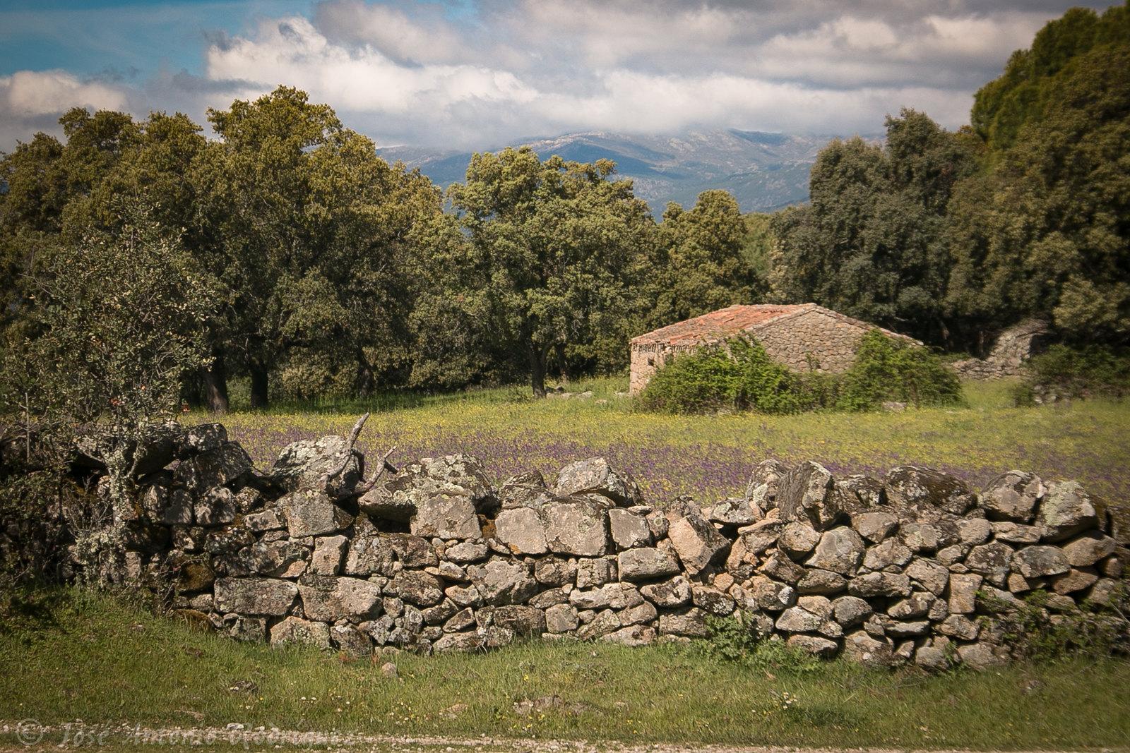 Campo en La Adrada