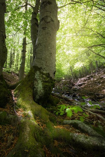 Historias del bosque