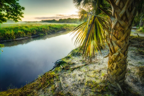 mist forest sunrise river florida bank sarasota hdr fronds myakkariverstatepark sabalpalmetto cabbagepalm