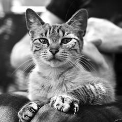 Il n'est si petit chat qui n'égratigne.
