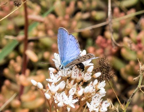 bulgaria butterflymoth europe peterphoto unidentifiedbutterfly dorkovo pazardjik
